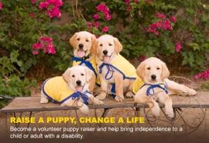 puppy_raiser_large_format_slide
